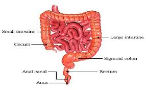 test your knowledge on digestive system quiz proprofs quiz