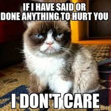 Unamused Cat Meme - angry meme cat meme best of the funny meme
