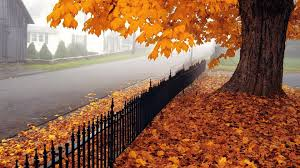 1920x1080 fall wallpaper download wallpaper 1920x1080 autumn tree leaves fence fencing
