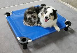 training a australian shepherd positive tails dog training wenatchee washington testimonials
