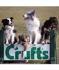crufts australian shepherd 2014 dog agility at crufts 2014 crufts pinterest birmingham dogs