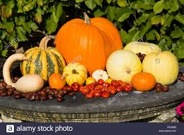 arrangement of autumnal ornamental gourds gourd squashes