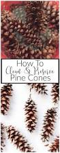 how to clean and preserve pine cones pine cone pine and cleaning