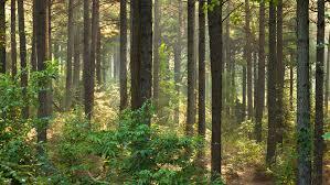 Arkansas forest images Wallpapers ouachita pine forest jpg