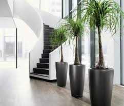 home interior plants decorations small indoors palm plants decor for corner home