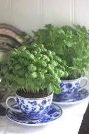 Herb Window Box Indoor Herbs Planter Boxes And Indoor On Pinterest
