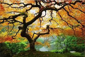 Wall Mural Autumn And Small Amazon Com Startonight Wall Art Canvas Maple Tree Nature Usa