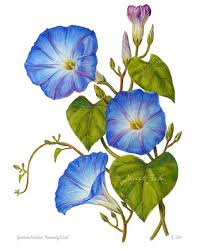 Blue Flower Vine - best 25 morning glory wall ideas on pinterest morning glory