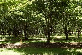 rockin u0027 m farms order chestnuts direct from the farm