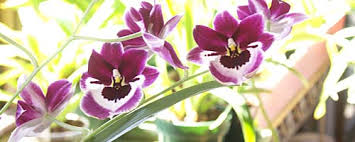 What Is An Orchid Flower - growing orchids in the home