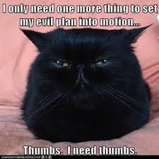 Colonel Meow Memes - which cat meme are you page 2