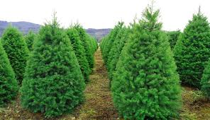 where to cut your own christmas tree near philly philadelphia