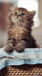 Cat Under Faucet Don U0027t Just Stare Get Me Out Of This Cats Pinterest Cat