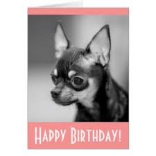 chihuahua birthday note cards zazzle