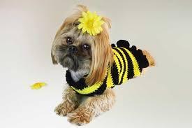 crochet pattern for dog coat crochet dog sweater pattern