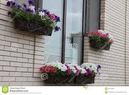Exterior Decoration Windows Home Decorated In A Petunia Flower Boxes Stock Photo
