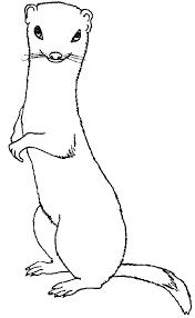 animaux dessin imprimer prefix tigre lion coloriage x dessiner un
