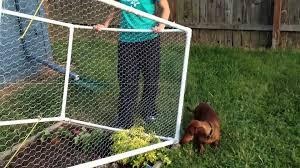 vegetable garden wire fence