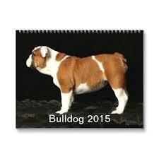 australian shepherd 2015 calendar the 233 best images about dogs on pinterest