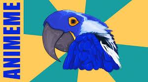 Paranoid Parrot Memes - paranoid parrot youtube