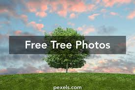 tree images pexels free stock photos