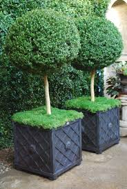 Lighted Topiary Trees Best 25 Topiary Trees Ideas On Pinterest Topiaries Topiary