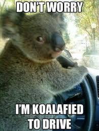 Meme Generator Koala - funny animal saying omg i love this stick google search funny