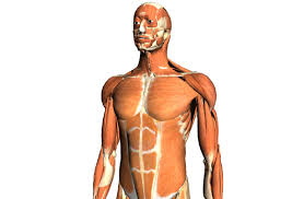 Google Body Anatomy Games For Gamers U2013 News And Download Of Free And Indie Videogames
