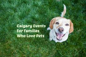affenpinscher calgary calgary and area pet friendly and family friendly events
