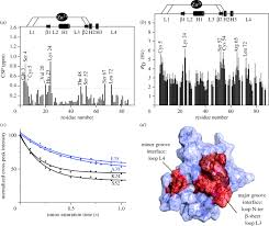 Dna Mapping Nuclear Magnetic Resonance Analysis Of Protein U2013dna Interactions