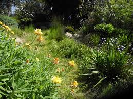 victorian native plants landscape design melbourne sandra mcmahon gardenscape design