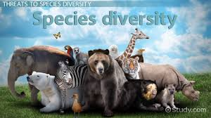 what is species diversity definition importance u0026 examples