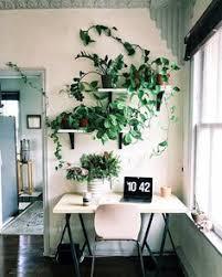 secr aire technique bureau d udes 5 toxin busting plants you ll want around this plants