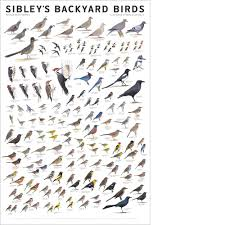 sibley u0027s backyard birds of western north america poster u2013 scott u0026 nix