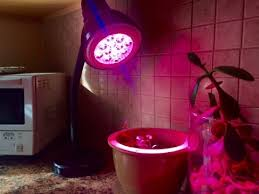 red and blue led grow lights red blue led grow light on cilantro seedlings youtube