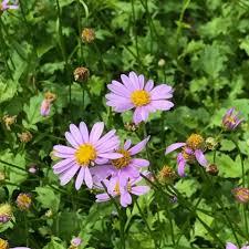 australian native plants for rock gardens video and photos australian national botanic gardens home facebook