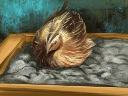 3 ways to bathe a pet quail wikihow