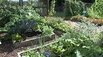 Vegetable Garden | Garden Idea