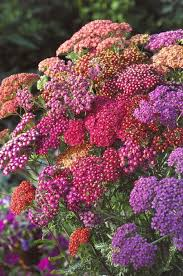 Late Blooming Perennials Best 25 Full Sun Garden Ideas On Pinterest Sun Garden Full Sun