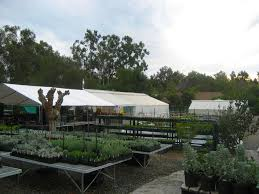san diego native plant nursery san diego nursery the ultimate guide install it direct