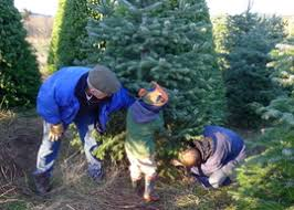 christmas trees and wreaths sunrise tree farm home