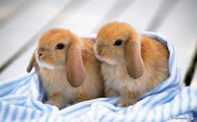 so you want to adopt a bunny u2026 baby or lauren mechelle