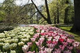 amsterdam in full bloom travel malay mail online