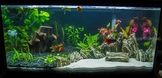 Vivarium Wood Decor Fish Tank Wood Stone Natural Decoration For Vivarium Aquarium Rock