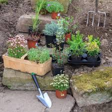 Rock Gardening Zone 5 Rock Gardens Suitable Rock Garden Plants For Zone 5 Gardens