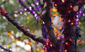led christmas lights for halloween absolutely celebration