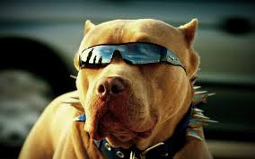 Cool Animal Wallpapers by Top 10 Dogs Wallpapers Hd Animals Wallpapers