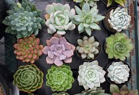 succulents meaning succulent plant you choose 4 from succulentoasis on etsy studio