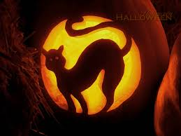 halloween cat background background collections black cat