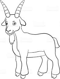 coloring pages farm animals cute billy goat smiles stock vector